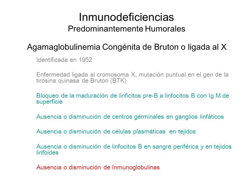 Inmunodeficiencias Predominantemente Humorales Agamaglobulinemia Congénita de Bruton o ligada al X Identificada en 1952 Enfermedad ligada al cromosoma