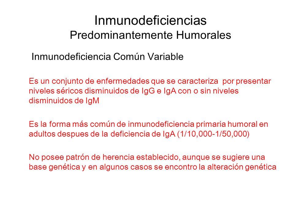 Inmunodeficiencias Predominantemente Humorales Inmunodeficiencia Común Variable Es un conjunto de enfermedades que se caracteriza por presentar nivele