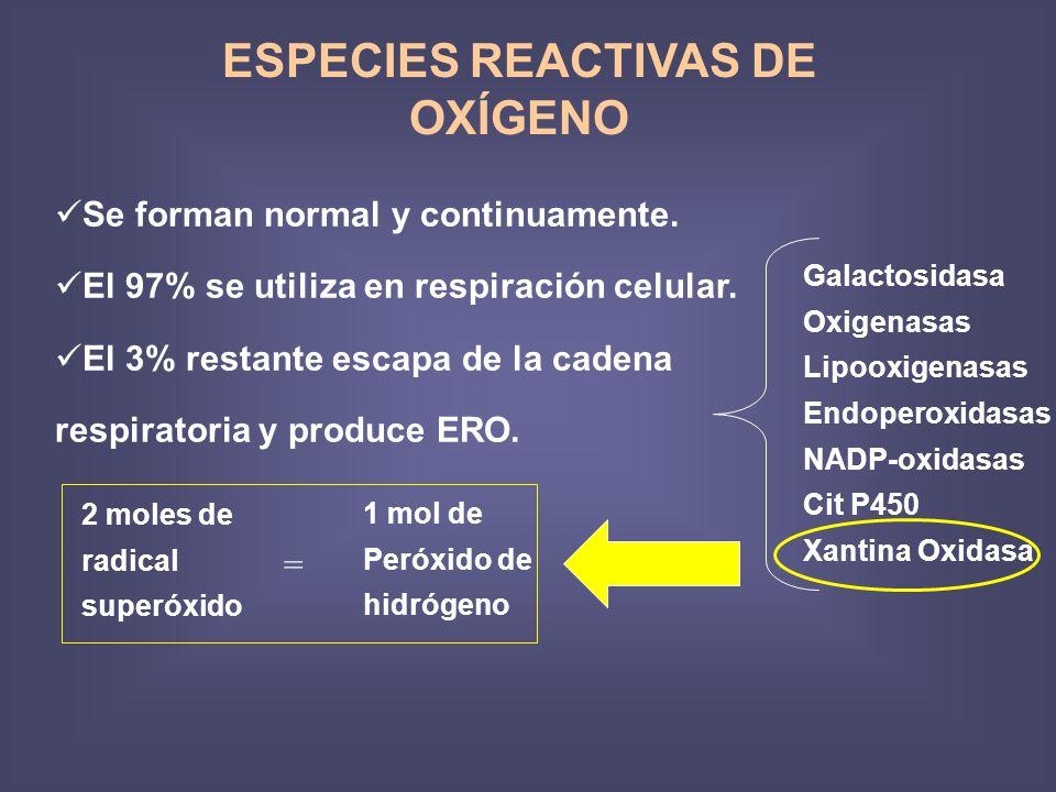 ESPECIES REACTIVAS DE OXÍGENO Se forman normal y continuamente. El 97% se utiliza en respiración celular. El 3% restante escapa de la cadena respirato