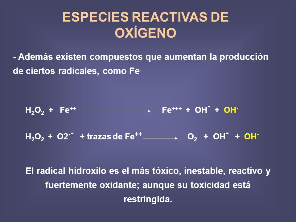 ESPECIES REACTIVAS DE OXÍGENO - Además existen compuestos que aumentan la producción de ciertos radicales, como Fe H 2 O 2 + Fe ++ Fe +++ + OH - + OH.