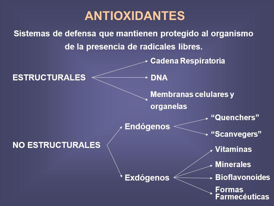 ANTIOXIDANTES Sistemas de defensa que mantienen protegido al organismo de la presencia de radicales libres. ESTRUCTURALES Cadena Respiratoria DNA Memb