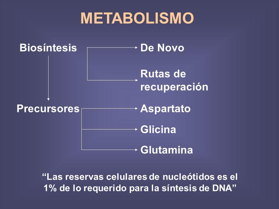 METABOLISMO BiosíntesisDe Novo Rutas de recuperación PrecursoresAspartato Glicina Glutamina Las reservas celulares de nucleótidos es el 1% de lo requerido para la síntesis de DNA