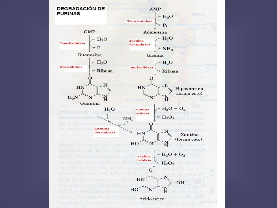 300 de acido urico acido urico alto e prostata acido urico eliminar naturalmente