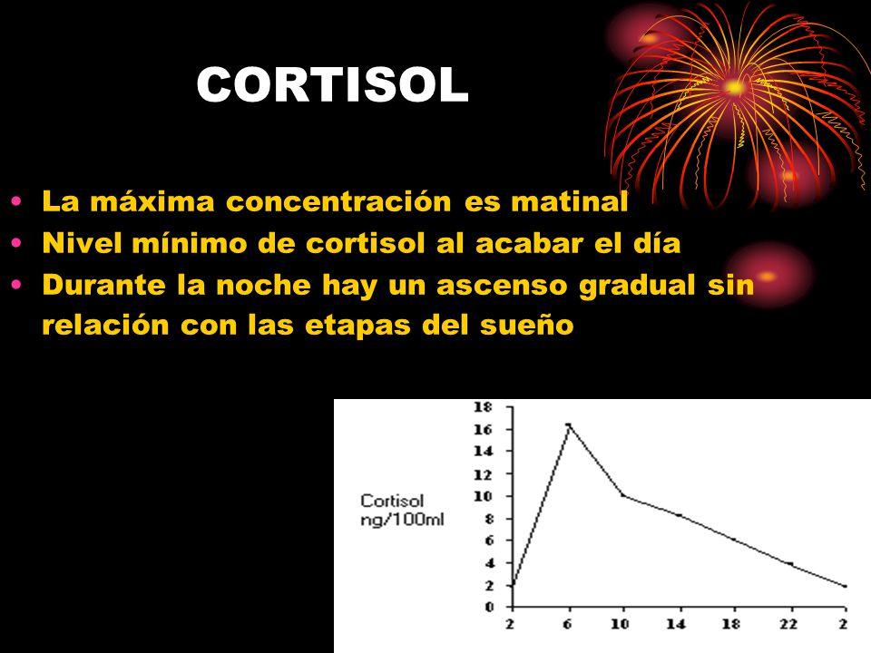 CORTISOL La máxima concentración es matinal Nivel mínimo de cortisol al acabar el día Durante la noche hay un ascenso gradual sin relación con las etapas del sueño