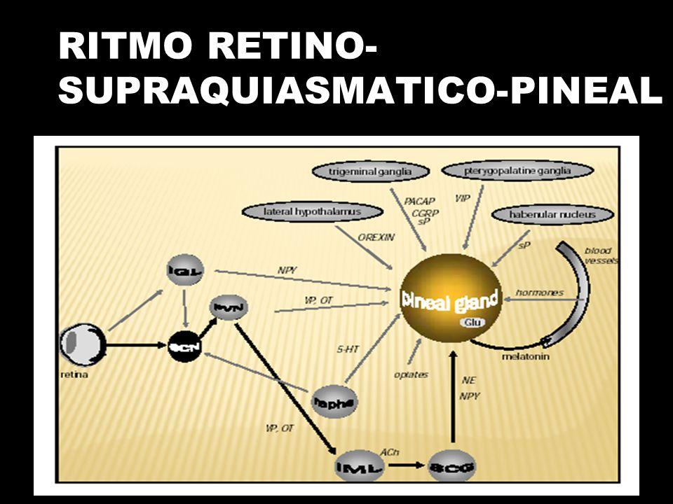 RITMO RETINO- SUPRAQUIASMATICO-PINEAL