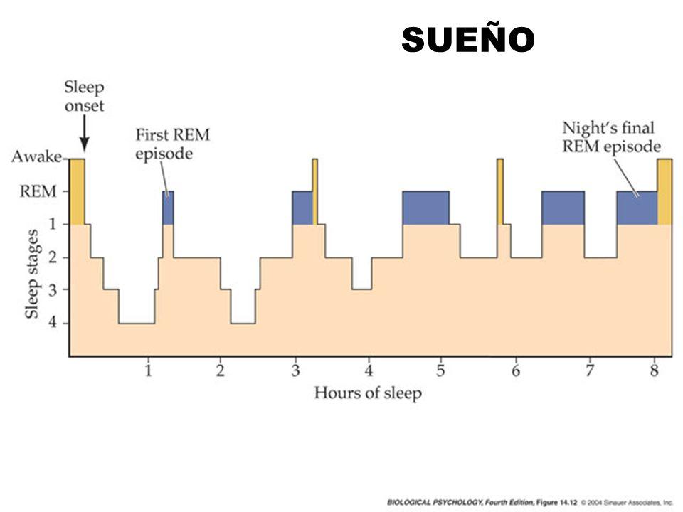 SAD Atrasa el pico de secreción de varias hormonas Disminución umbral de secreción de melatonina Menor respuesta de melatonina a la estimulación lumínica, sobretodo en invierno Mayor sensibilidad serotoninérgica