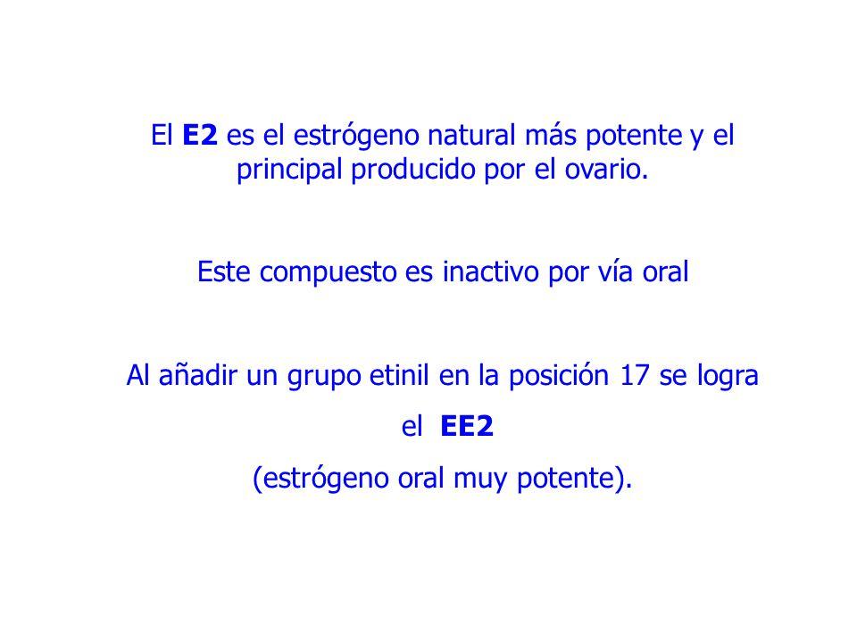 El E2 es el estrógeno natural más potente y el principal producido por el ovario.