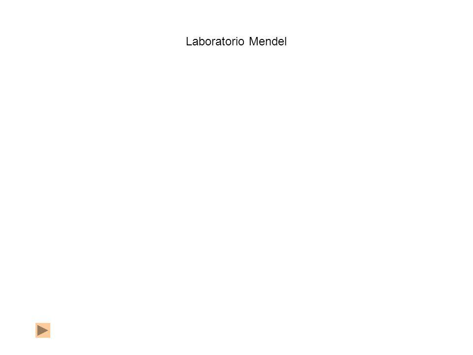 Laboratorio Mendel