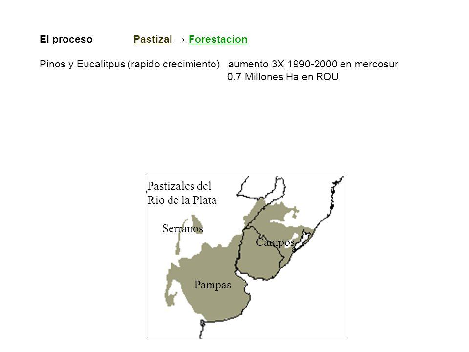 El proceso Pastizal Forestacion Pinos y Eucalitpus (rapido crecimiento) aumento 3X 1990-2000 en mercosur 0.7 Millones Ha en ROU El ambito Pastizales remanentes de Ar-Br-Uy - tierras no cultivadas (pendiente, rocosidad, inundacion, etc) - abundante precipitacion (alta produccion primaria neta -PPN-) Pastizales del Rio de la Plata Serranos Campos Pampas
