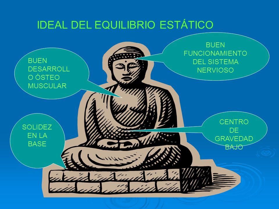 IDEAL DEL EQUILIBRIO ESTÁTICO SOLIDEZ EN LA BASE CENTRO DE GRAVEDAD BAJO BUEN FUNCIONAMIENTO DEL SISTEMA NERVIOSO BUEN DESARROLL O ÓSTEO MUSCULAR