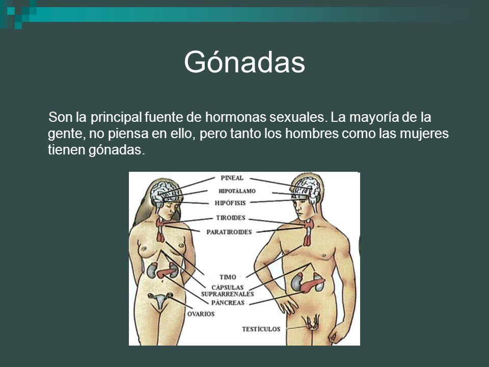 Gónadas Son la principal fuente de hormonas sexuales. La mayoría de la gente, no piensa en ello, pero tanto los hombres como las mujeres tienen gónada