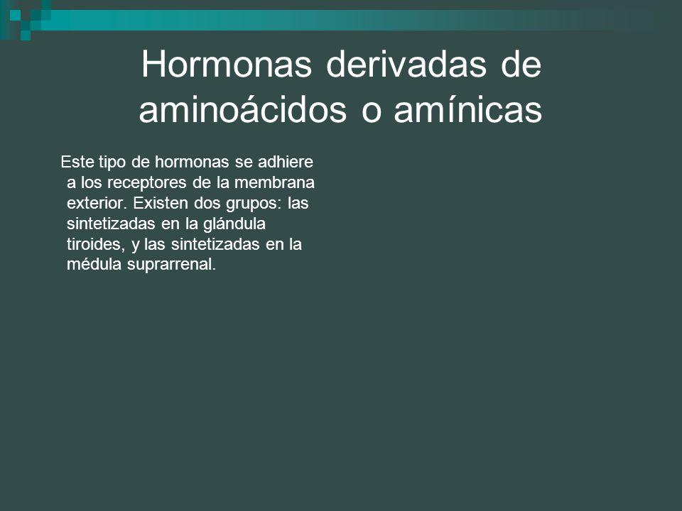 Hormonas derivadas de aminoácidos o amínicas Este tipo de hormonas se adhiere a los receptores de la membrana exterior. Existen dos grupos: las sintet