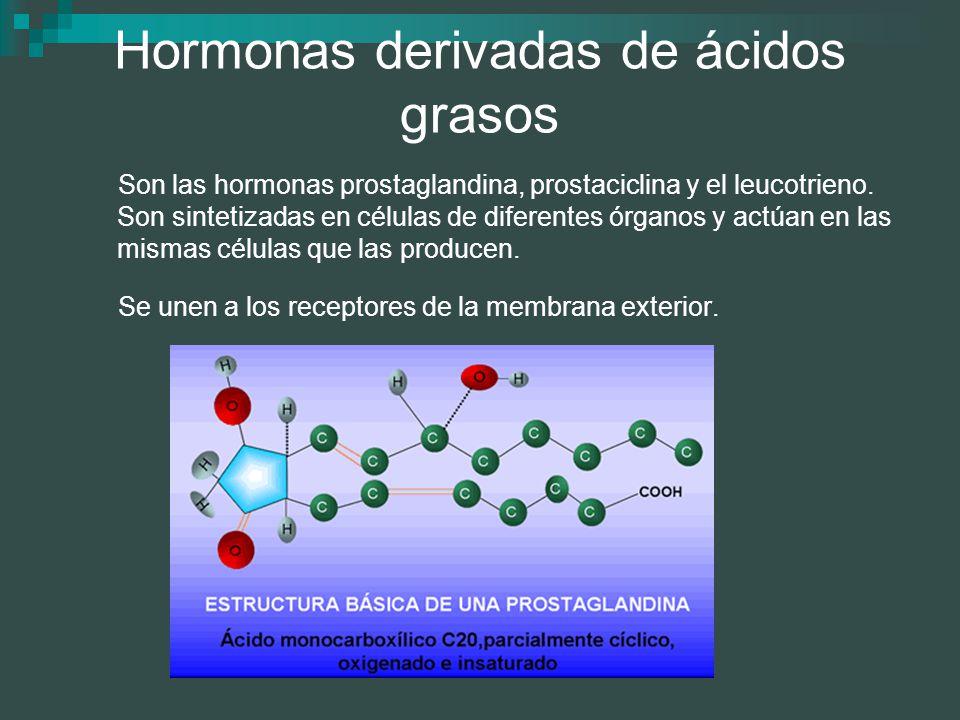 Hormonas derivadas de ácidos grasos Son las hormonas prostaglandina, prostaciclina y el leucotrieno. Son sintetizadas en células de diferentes órganos