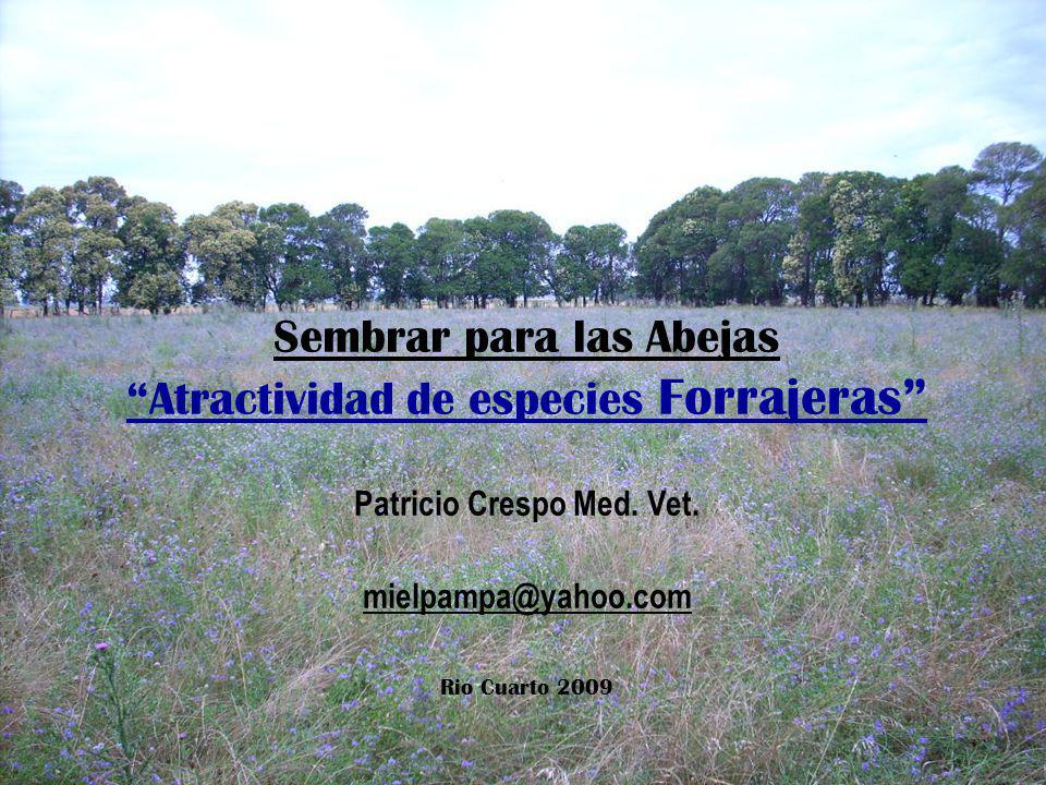 Sembrar para las Abejas Atractividad de especies Forrajeras Patricio Crespo Med. Vet. mielpampa@yahoo.com Rio Cuarto 2009