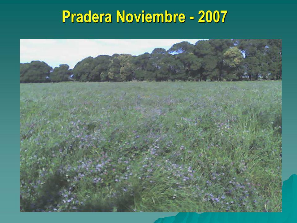 Pradera Noviembre - 2007