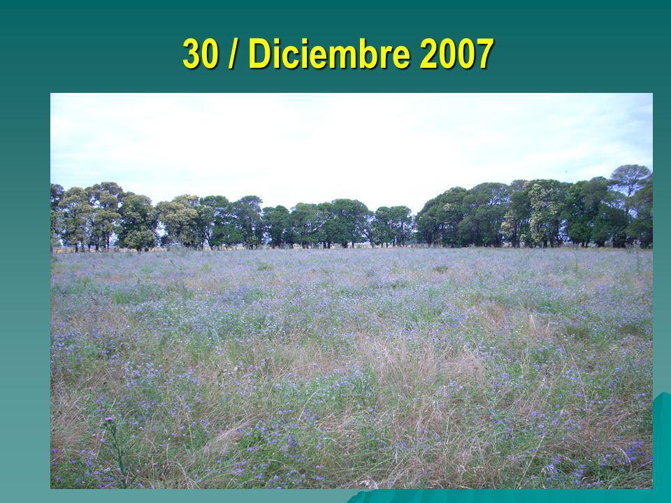 30 / Diciembre 2007