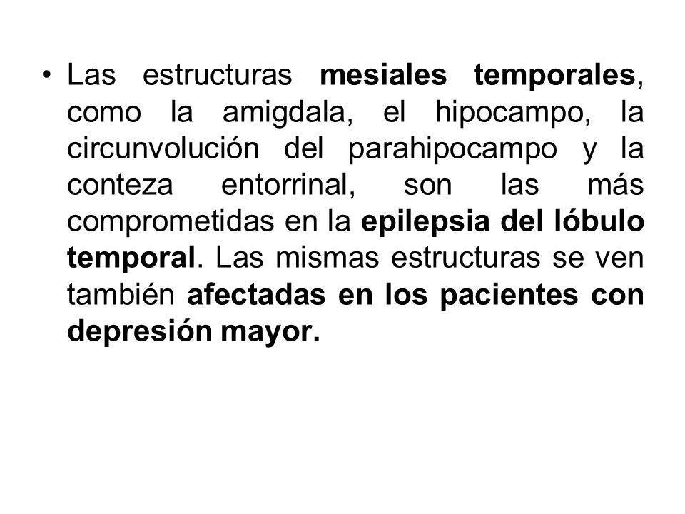 Las estructuras mesiales temporales, como la amigdala, el hipocampo, la circunvolución del parahipocampo y la conteza entorrinal, son las más comprome