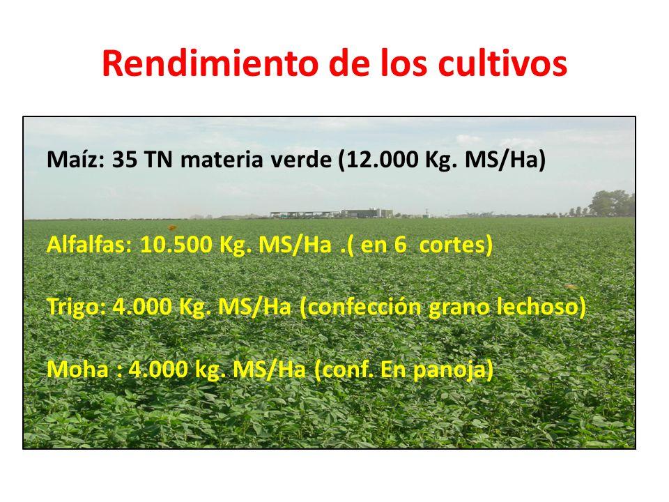 Rendimiento de los cultivos Maíz: 35 TN materia verde (12.000 Kg. MS/Ha) Alfalfas: 10.500 Kg. MS/Ha.( en 6 cortes) Trigo: 4.000 Kg. MS/Ha (confección