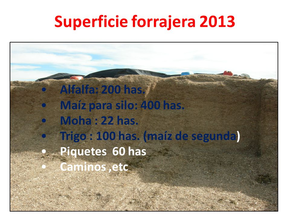 Superficie forrajera 2013 Alfalfa: 200 has. Maíz para silo: 400 has. Moha : 22 has. Trigo : 100 has. (maíz de segunda) Piquetes 60 has Caminos,etc