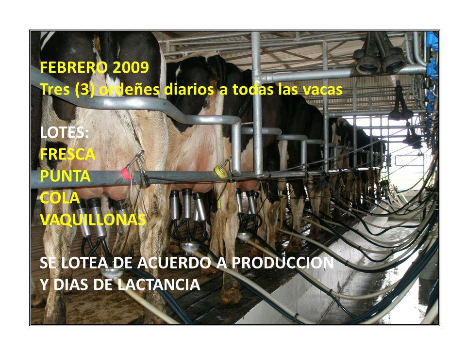 FEBRERO 2009 Tres (3) ordeñes diarios a todas las vacas LOTES: FRESCA PUNTA COLA VAQUILLONAS SE LOTEA DE ACUERDO A PRODUCCION Y DIAS DE LACTANCIA
