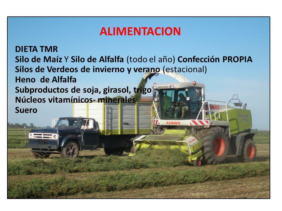 ALIMENTACION DIETA TMR Silo de Maíz Y Silo de Alfalfa (todo el año) Confección PROPIA Silos de Verdeos de invierno y verano (estacional) Heno de Alfal