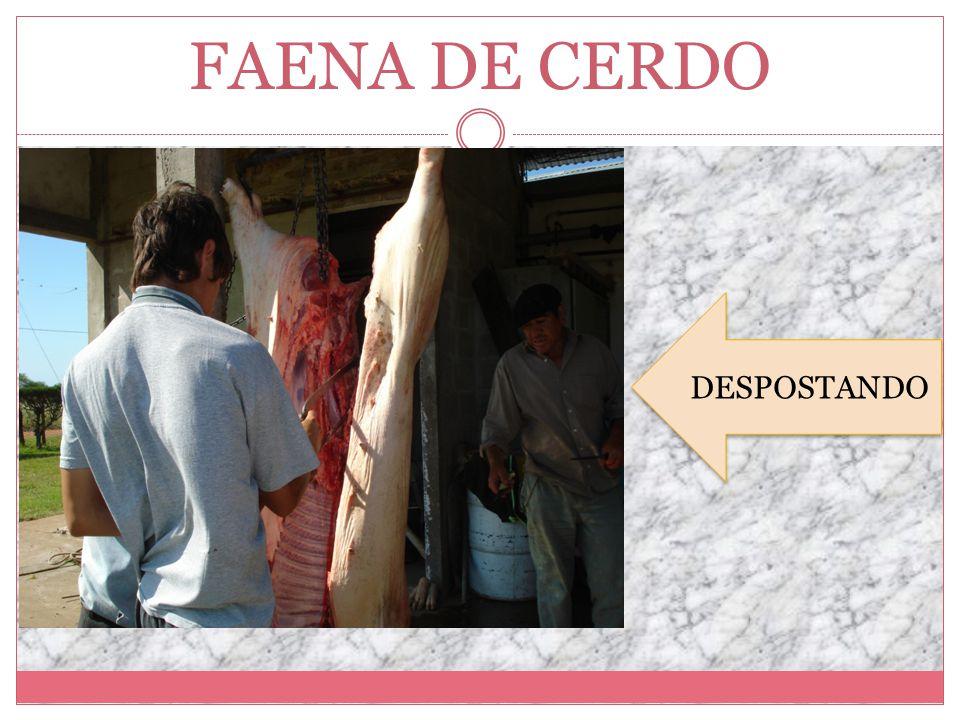 FAENA DE CERDO DESPOSTANDO DESPOSTANDO