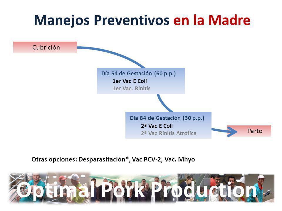 Parto Optimal Pork Production Manejos Preventivos en la Madre Cubrición Día 54 de Gestación (60 p.p.) 1er Vac E Coli 1er Vac. Rinitis Día 84 de Gestac