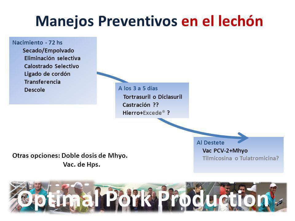 Al Destete Vac PCV-2+Mhyo Tilmicosina o Tulatromicina? Optimal Pork Production Manejos Preventivos en el lechón Nacimiento - 72 hs Secado/Empolvado El
