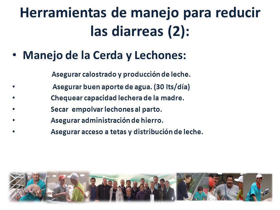 Herramientas de manejo para reducir las diarreas (2): Manejo de la Cerda y Lechones: Asegurar calostrado y producción de leche. Asegurar buen aporte d