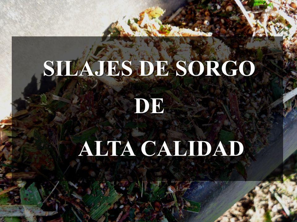 SILAJES DE SORGO ALTA CALIDAD DE