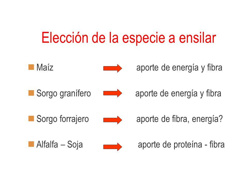 Elección de la especie a ensilar Maíz aporte de energía y fibra Sorgo granífero aporte de energía y fibra Sorgo forrajero aporte de fibra, energía? Al