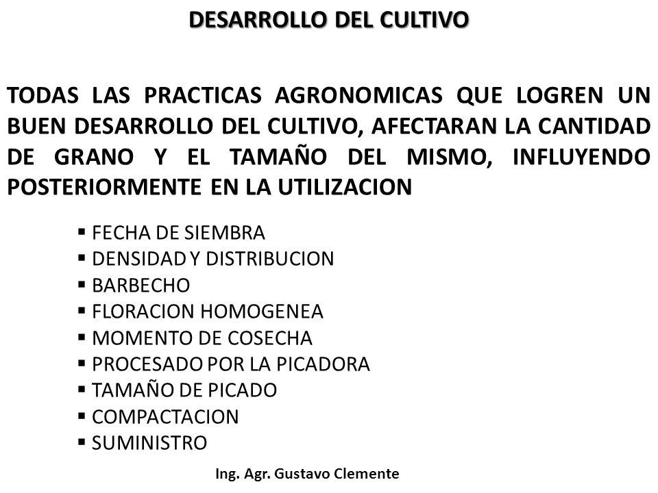 Ing. Agr. Gustavo Clemente DESARROLLO DEL CULTIVO TODAS LAS PRACTICAS AGRONOMICAS QUE LOGREN UN BUEN DESARROLLO DEL CULTIVO, AFECTARAN LA CANTIDAD DE