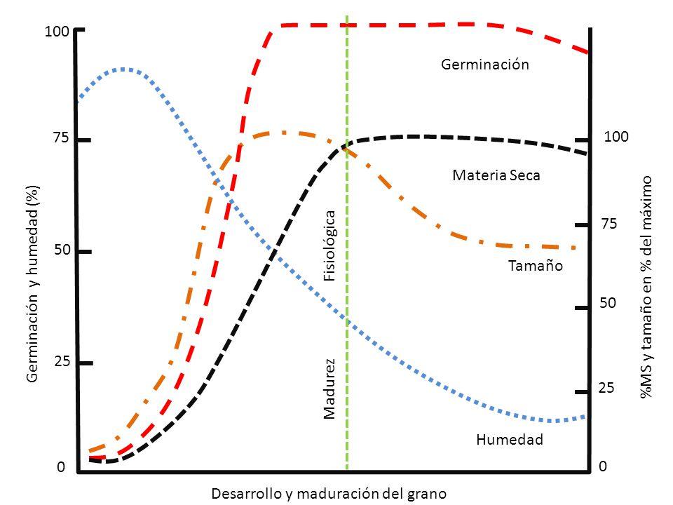 100 75 50 25 0 0 50 75 100 Germinación y humedad (%) Desarrollo y maduración del grano %MS y tamaño en % del máximo Madurez Fisiológica Germinación Ma