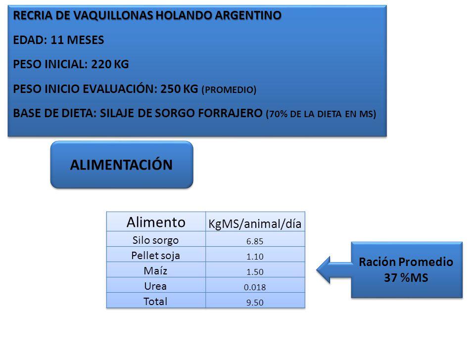 RECRIA DE VAQUILLONAS HOLANDO ARGENTINO EDAD: 11 MESES PESO INICIAL: 220 KG PESO INICIO EVALUACIÓN: 250 KG (PROMEDIO) BASE DE DIETA: SILAJE DE SORGO F