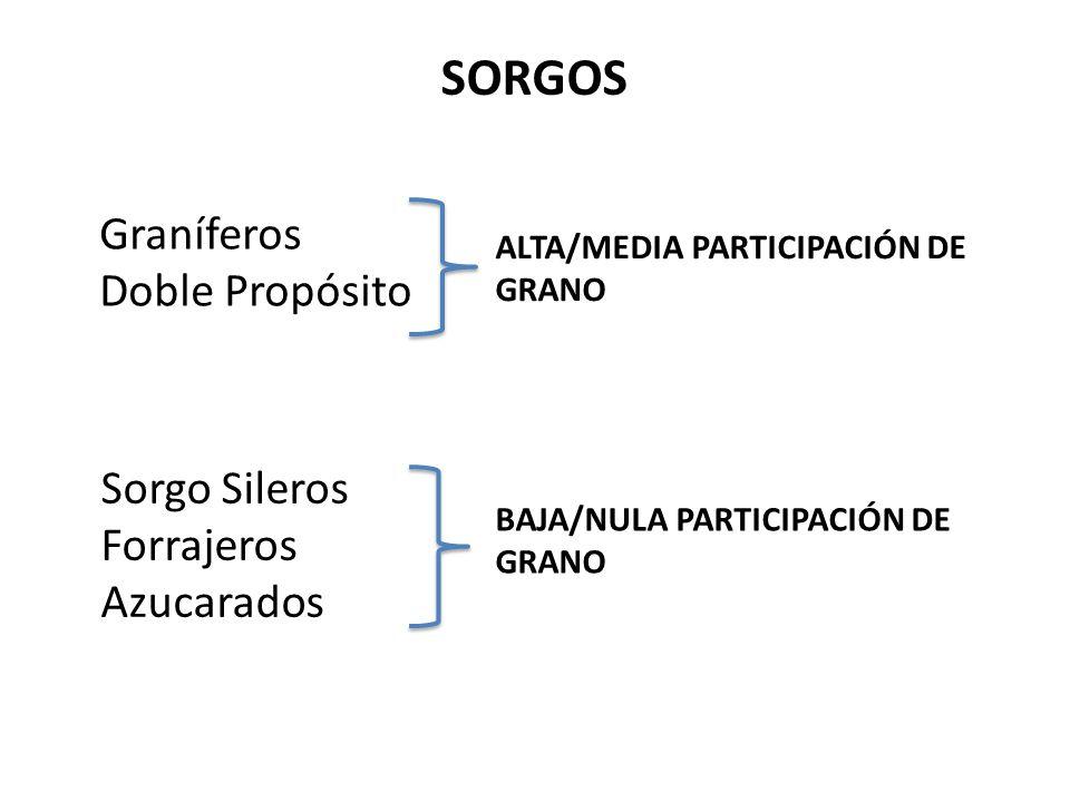 Graníferos Doble Propósito SORGOS ALTA/MEDIA PARTICIPACIÓN DE GRANO BAJA/NULA PARTICIPACIÓN DE GRANO Sorgo Sileros Forrajeros Azucarados