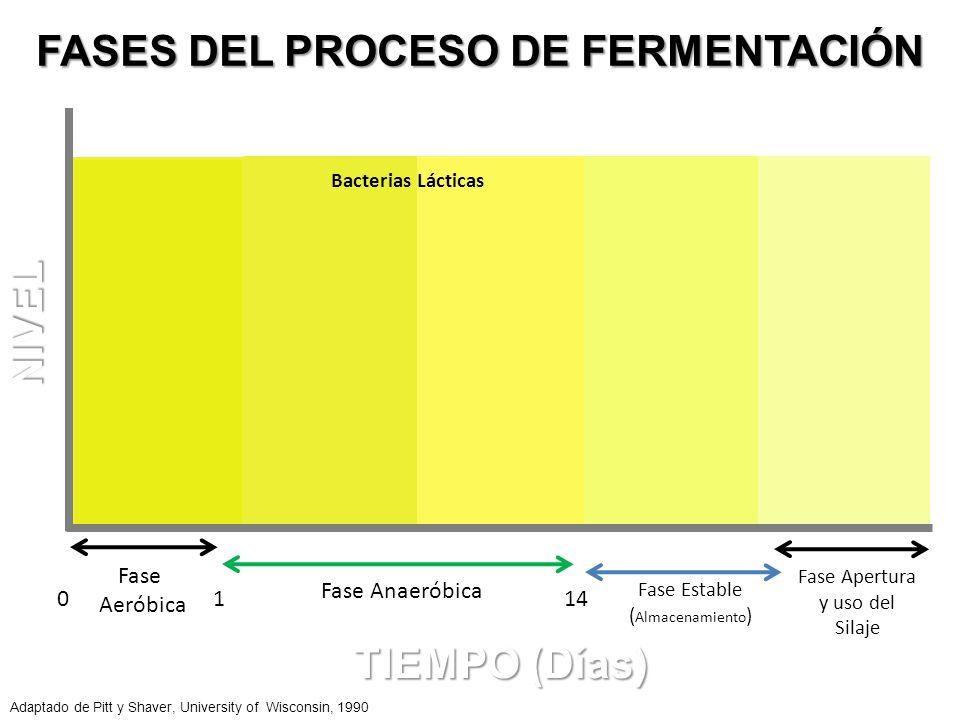 Fase Aeróbica 01 Fase Anaeróbica 14 Fase Estable ( Almacenamiento ) Fase Apertura y uso del Silaje Oxigeno pH Oxigeno FASES DEL PROCESO DE FERMENTACIÓ