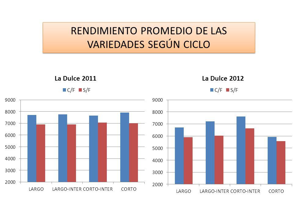 RENDIMIENTO PROMEDIO DE LAS VARIEDADES SEGÚN CICLO