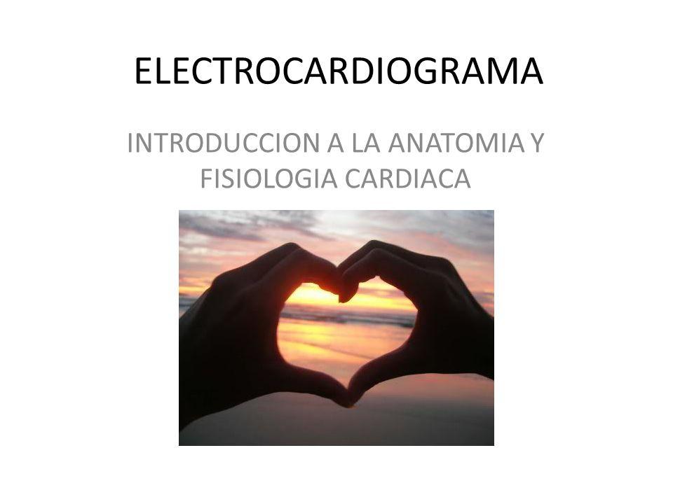 ELECTROCARDIOGRAMA INTRODUCCION A LA ANATOMIA Y FISIOLOGIA CARDIACA