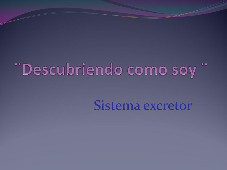 El sistema excretor está constituido por el aparato urinario, los pulmones y la piel.