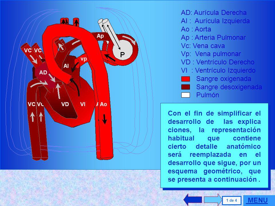 SISTEMA CARDIO-PULMONAR UNIDAD CORAZON-PULMON VENTILACION EN REPOSO VENTILACION FORZADA SISTEMA CARDIO-PULMONAR UNIDAD CORAZON-PULMON VENTILACION EN R