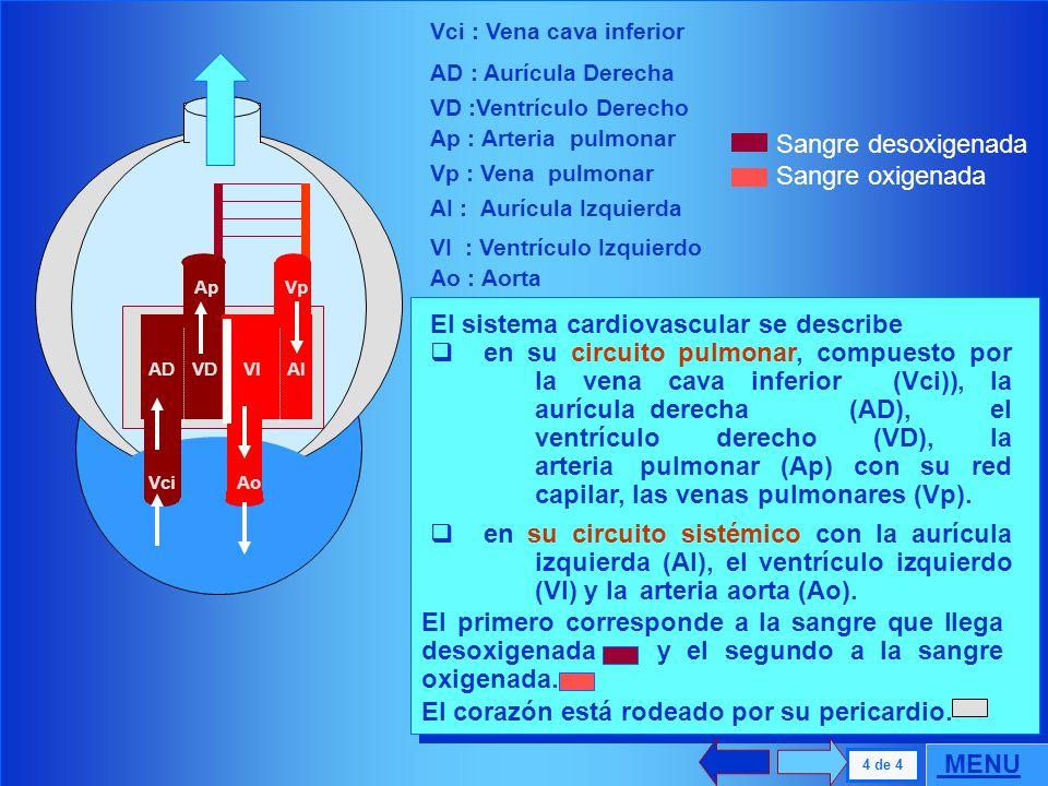 . 3 de 4 Cavidad Torácica Cavidad Abdominal Movimiento de gas La parte ventilatoria se describe como la caja torácica y el abdomen. Las vías aéreas in
