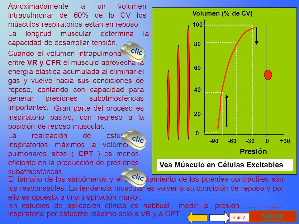 100 80 60 40 20 0 -90 -60 -30 0 +30 Volumen (% de CV) Presión Aproximadamente a un volumen intrapulmonar de 60% de la CV los músculos respiratorios están en reposo.
