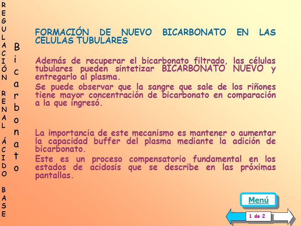 FACTORES QUE AFECTAN LA REABSORCIÓN DE BICARBONATO 4.- EFECTO DE LAS VARIACIONES DE LA TASA DE FILTRACIÓN GLOMÉRULAR (TFG) La secreción de hidrogenion