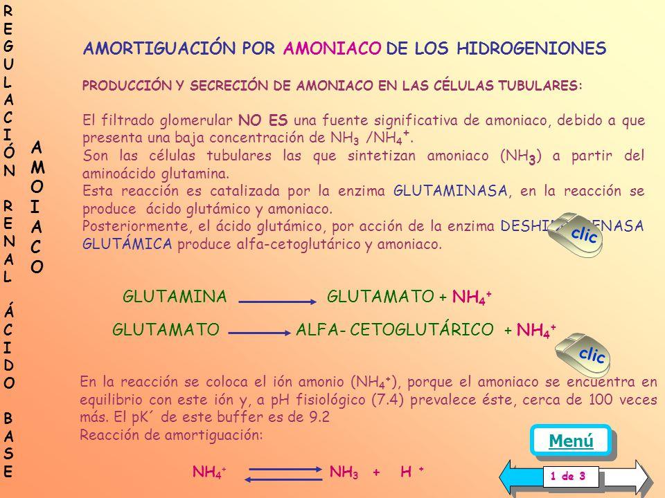 Célula túbulo proximal AC Luz tubular AC FORMACIÓN DE NUEVO BICARBONATO EN LAS CÉLULAS TUBULARES AMORTIGUACIÓN POR EL BUFFER FOSFATO DE LOS HIDROGENIO