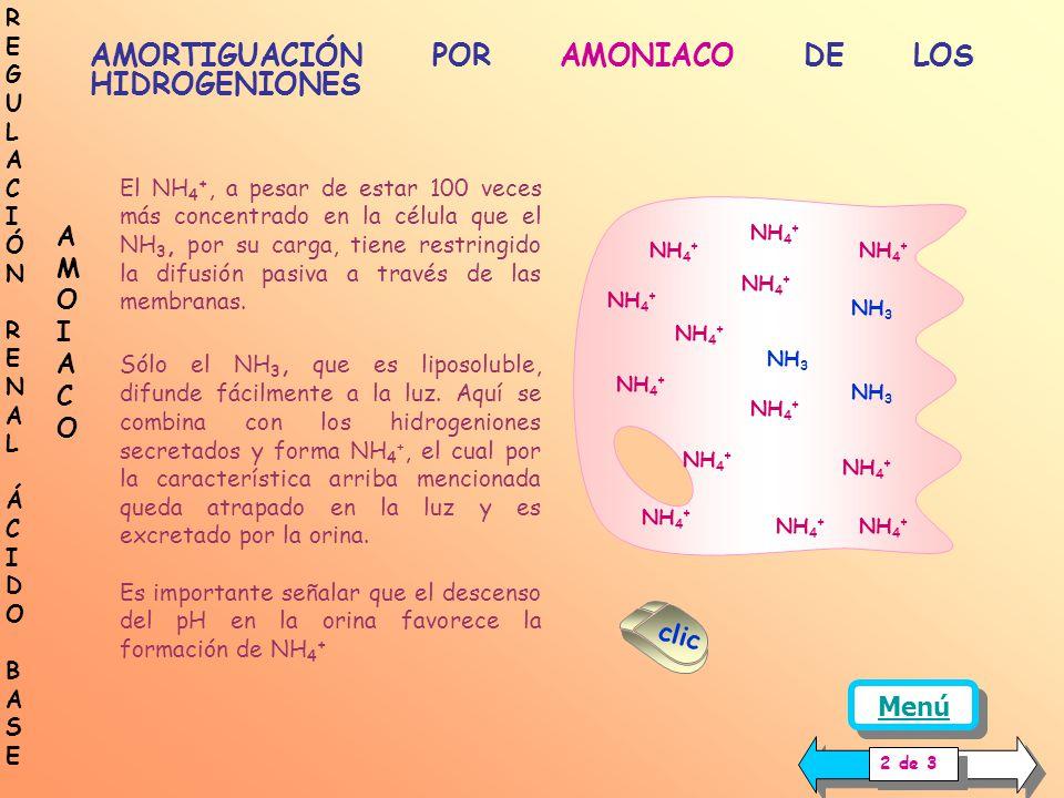 GLUTAMINA GLUTAMATO + NH 4 + GLUTAMATO ALFA- CETOGLUTÁRICO + NH 4 + AMORTIGUACIÓN POR AMONIACO DE LOS HIDROGENIONES PRODUCCIÓN Y SECRECIÓN DE AMONIACO