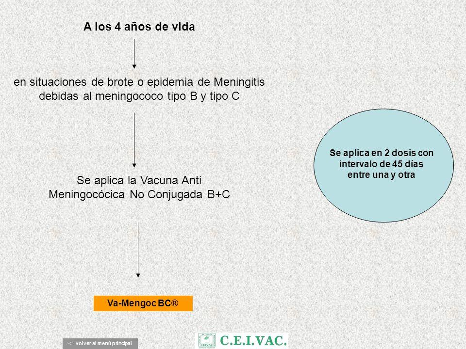 A los 4 años de vida <= volver al menú principal Va-Mengoc BC® en situaciones de brote o epidemia de Meningitis debidas al meningococo tipo B y tipo C