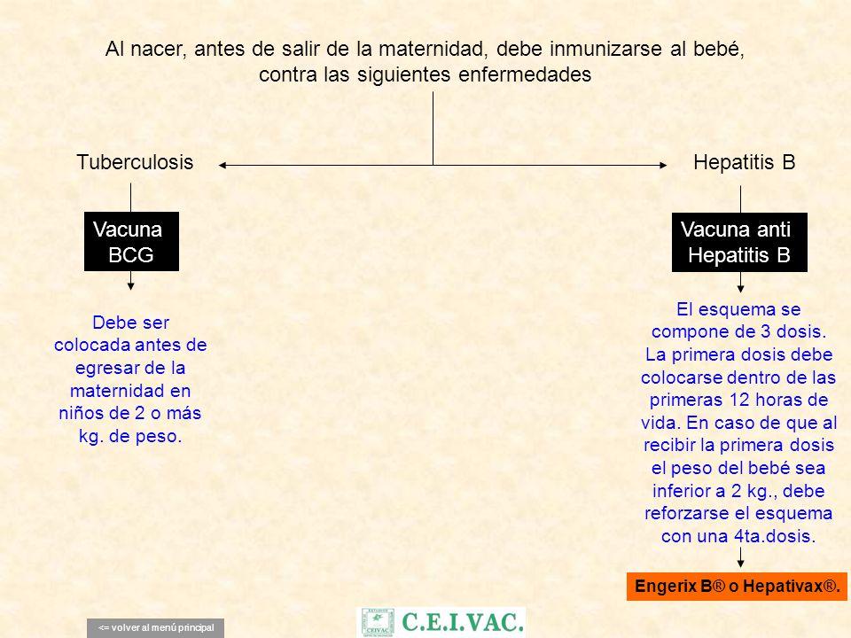 Al nacer, antes de salir de la maternidad, debe inmunizarse al bebé, contra las siguientes enfermedades Vacuna anti Hepatitis B Vacuna BCG <= volver a