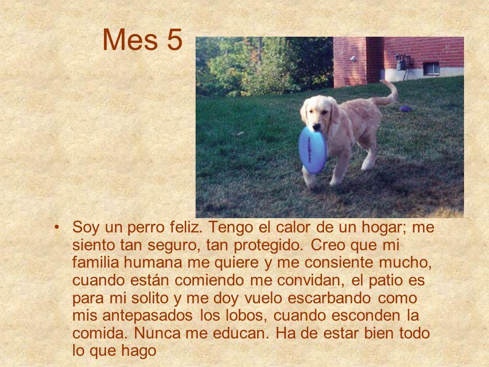 Mes 5 Soy un perro feliz. Tengo el calor de un hogar; me siento tan seguro, tan protegido. Creo que mi familia humana me quiere y me consiente mucho,
