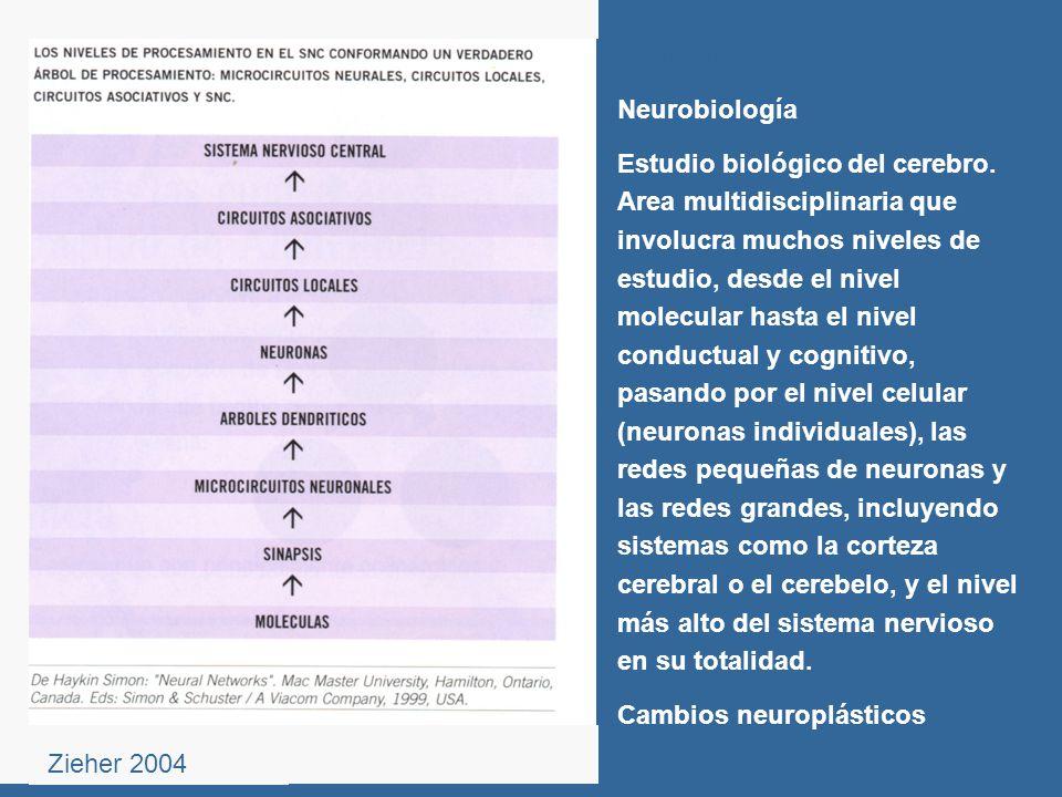 Neurobiología Estudio biológico del cerebro. Area multidisciplinaria que involucra muchos niveles de estudio, desde el nivel molecular hasta el nivel
