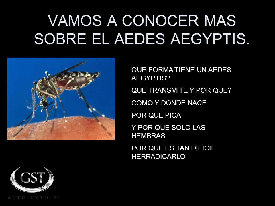 VAMOS A CONOCER MAS SOBRE EL AEDES AEGYPTIS.QUE FORMA TIENE UN AEDES AEGYPTIS.
